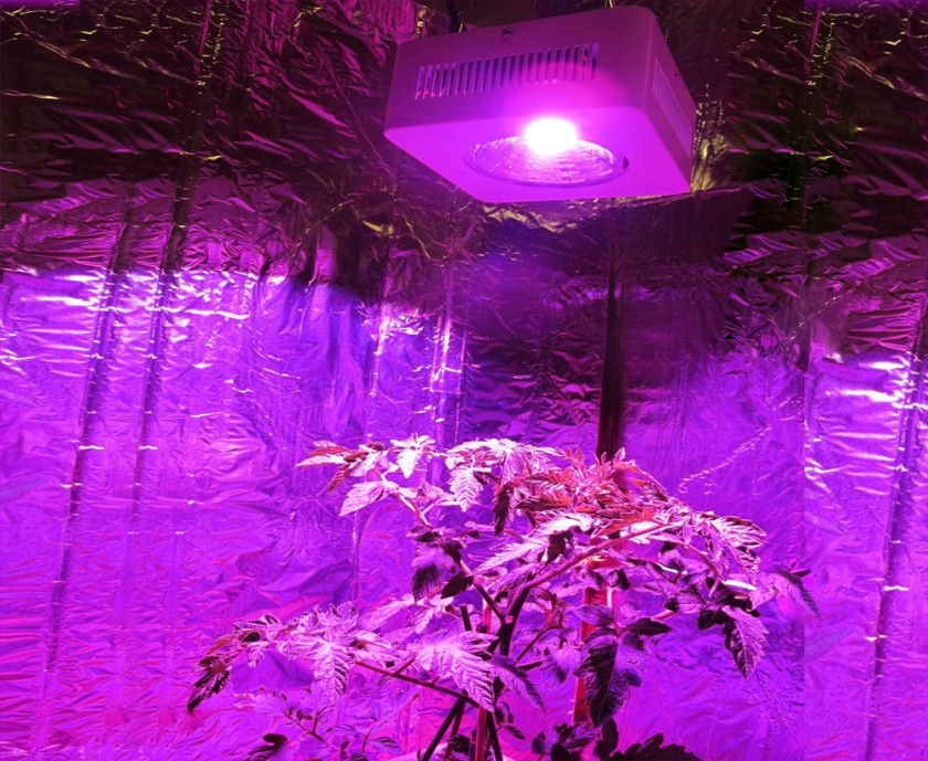 led grow light.jpg